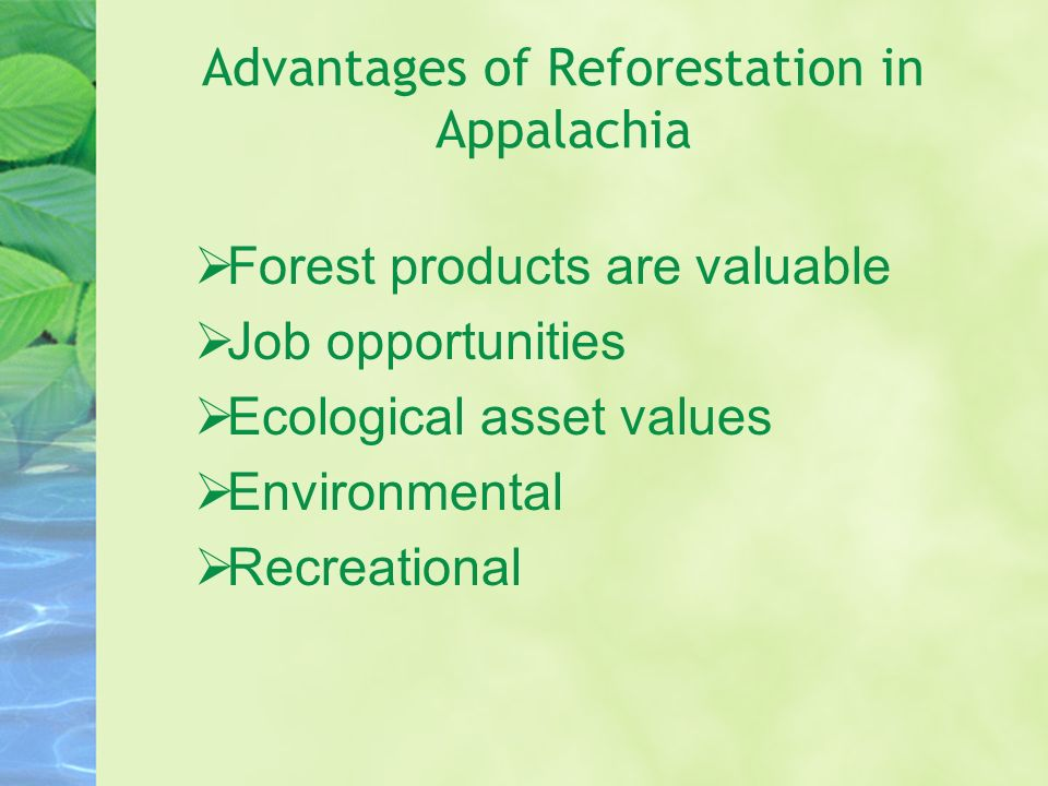 Advantages of Reforestation in Appalachia