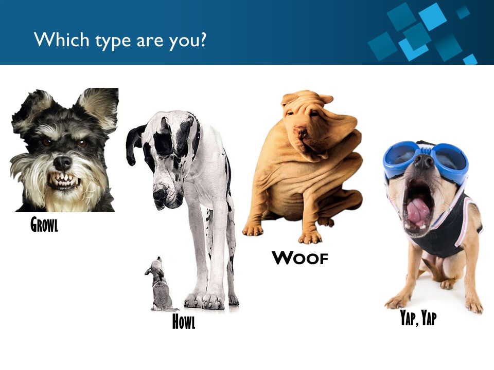 Which type are you Growl Woof Yap, Yap Howl
