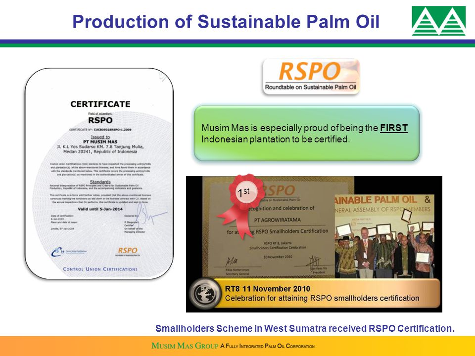 Production of Sustainable Palm Oil