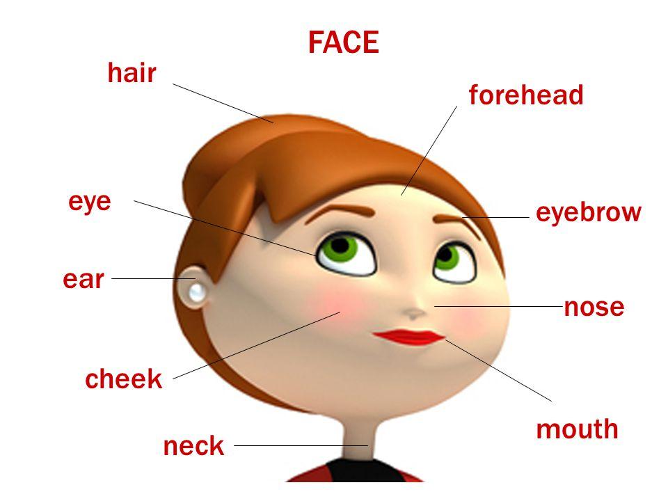 FACE hair forehead eye eyebrow ear nose cheek mouth neck
