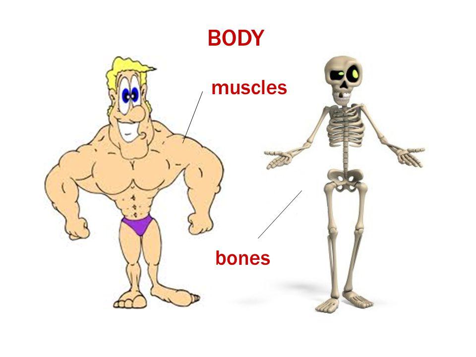 BODY muscles bones