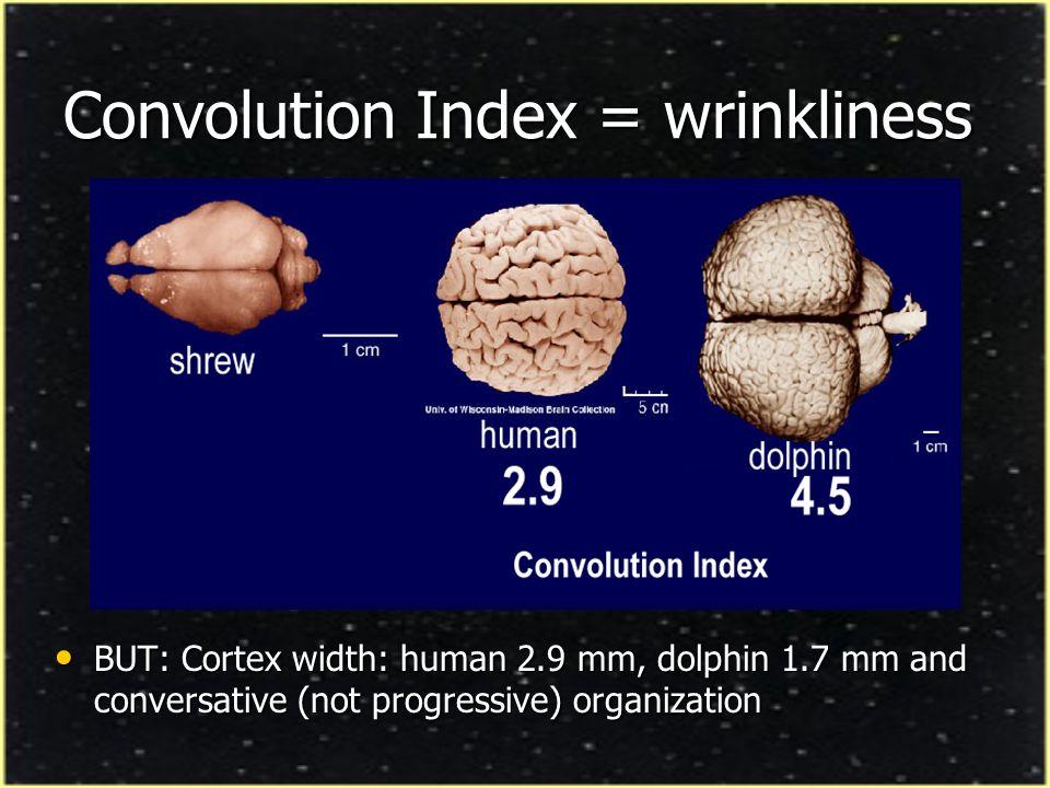 Convolution Index = wrinkliness