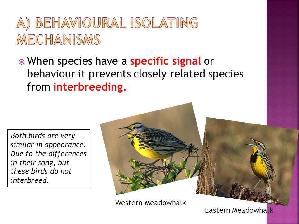a) Behavioural isolating mechanisms
