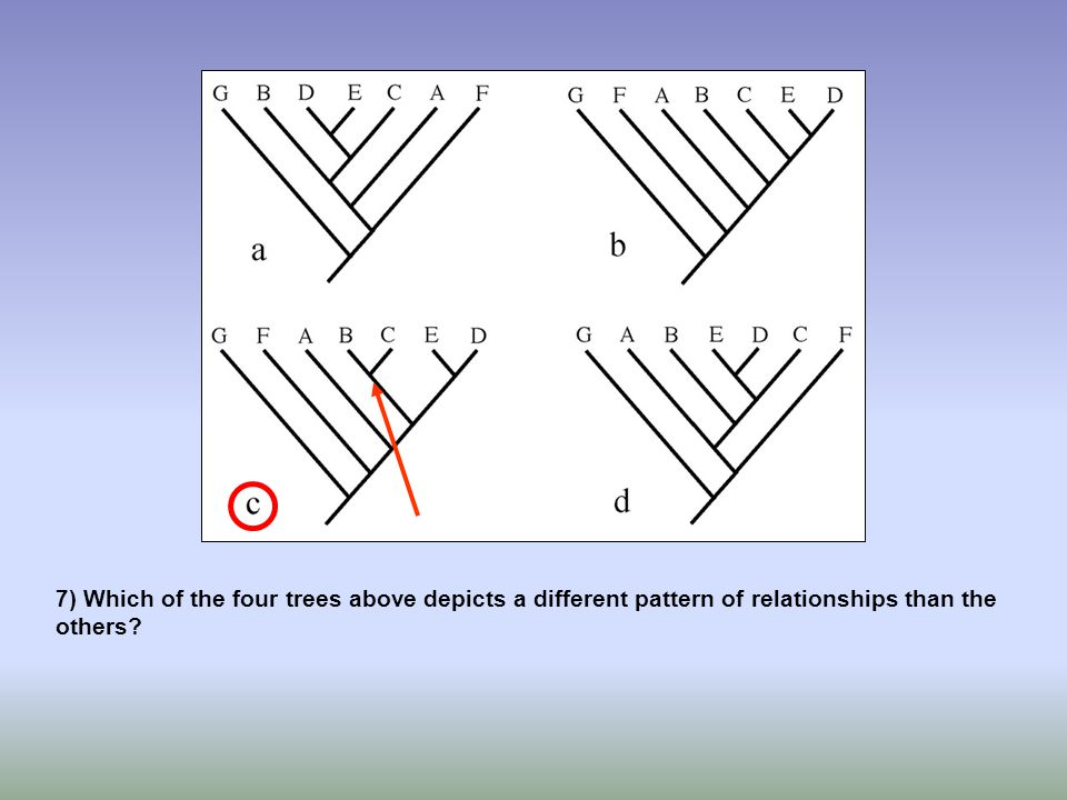 7) Which of the four trees above depicts a different pattern of relationships than the others