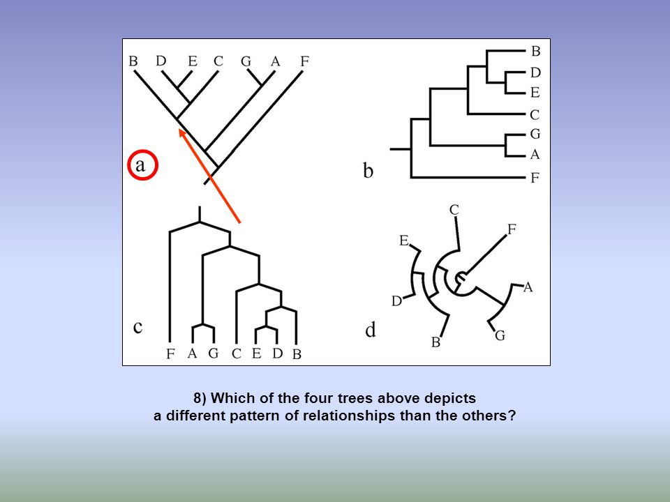 8) Which of the four trees above depicts