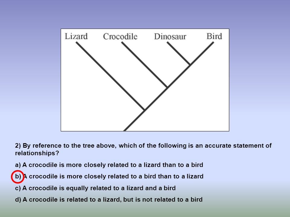 2) By reference to the tree above, which of the following is an accurate statement of relationships