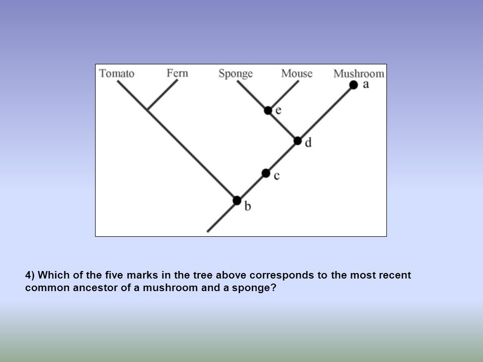 4) Which of the five marks in the tree above corresponds to the most recent common ancestor of a mushroom and a sponge