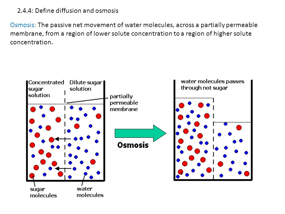 2.4.4: Define diffusion and osmosis