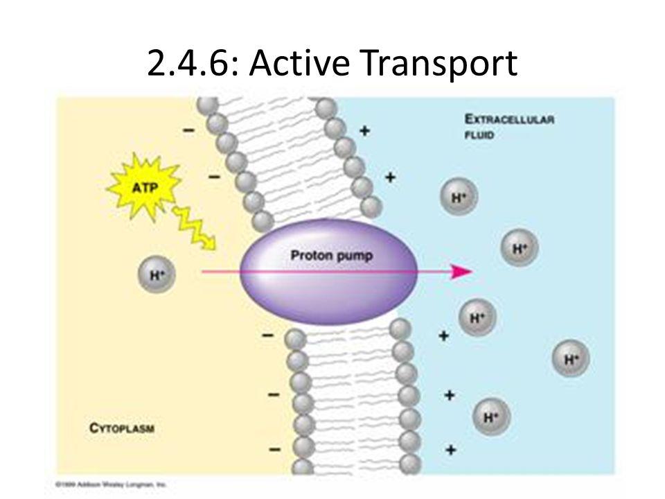 2.4.6: Active Transport