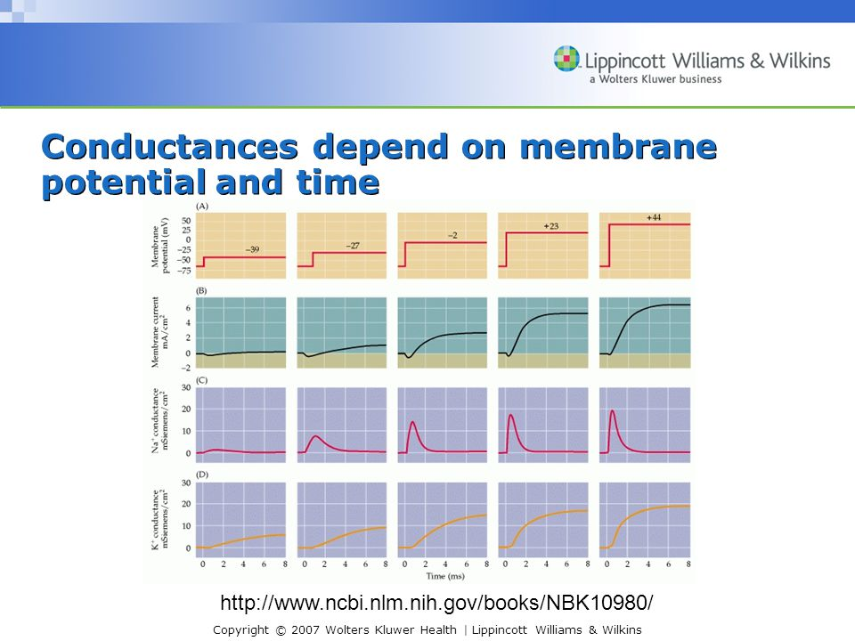 Conductances depend on membrane potential and time