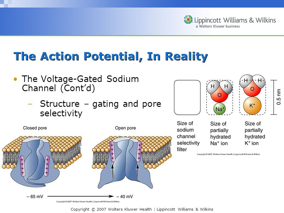 The Action Potential, In Reality
