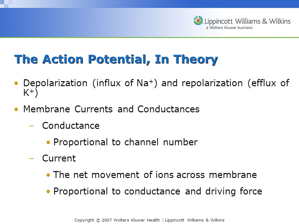 The Action Potential, In Theory