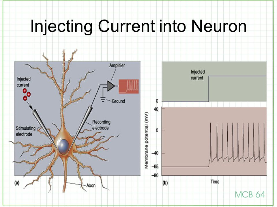 Injecting Current into Neuron