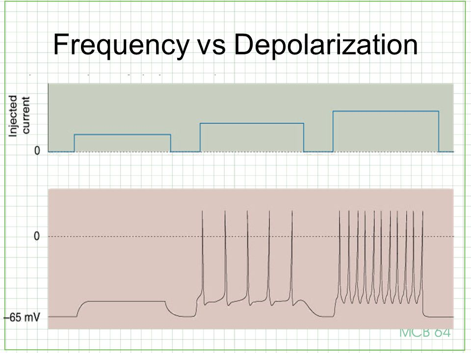 Frequency vs Depolarization