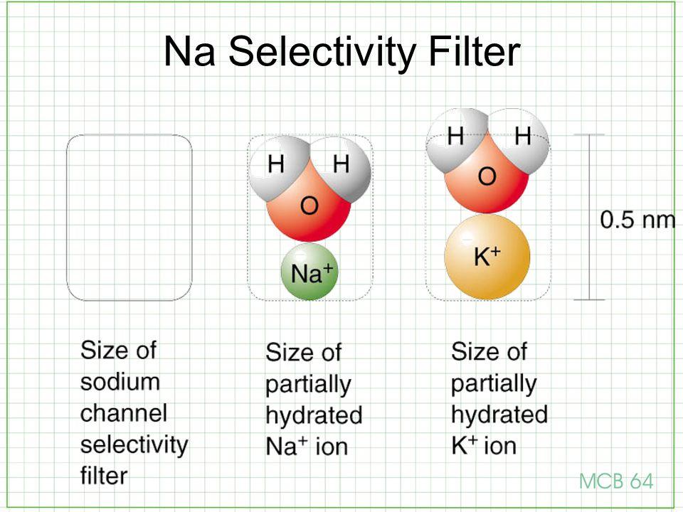 Na Selectivity Filter