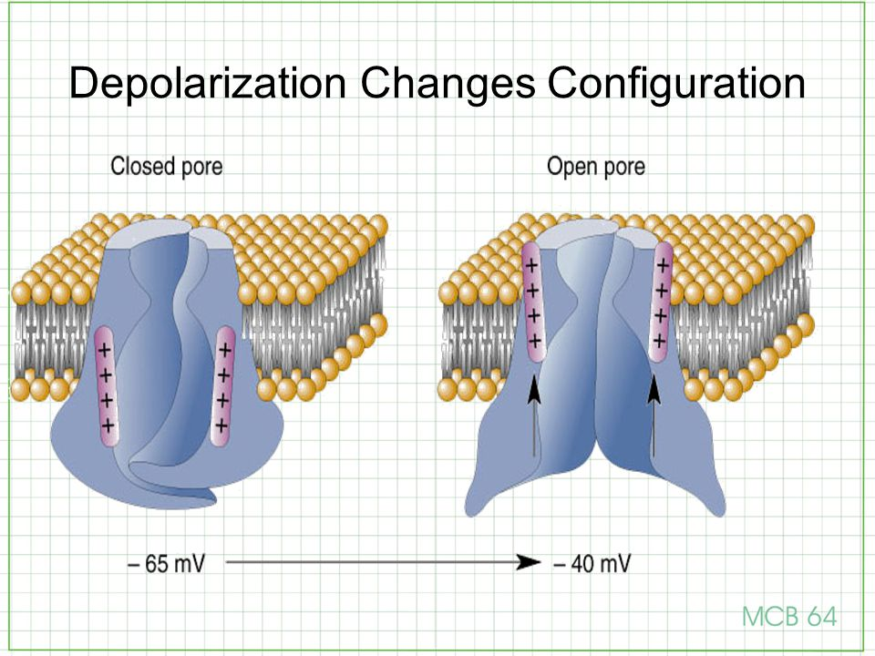 Depolarization Changes Configuration