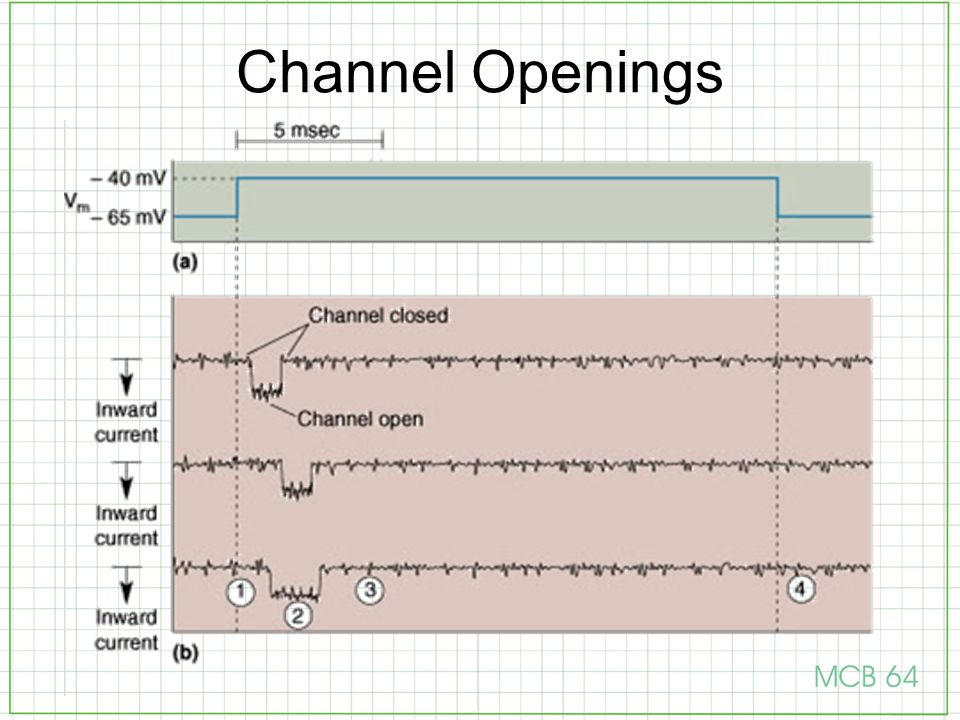 Channel Openings