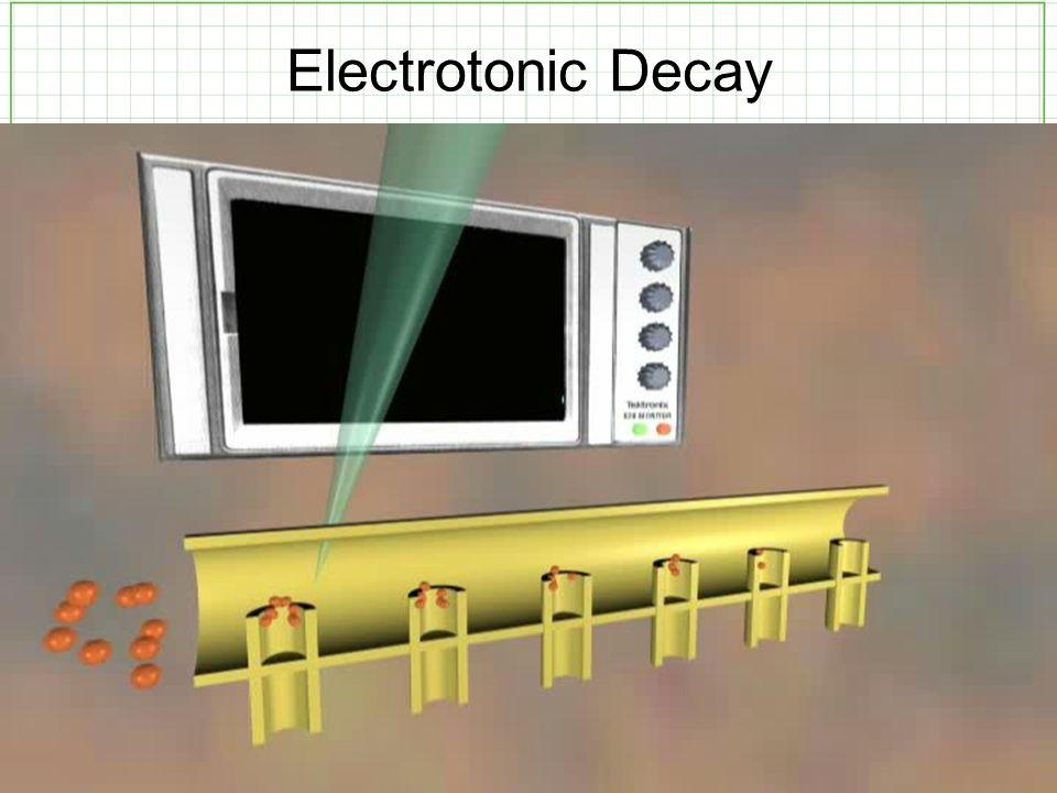 Electrotonic Decay