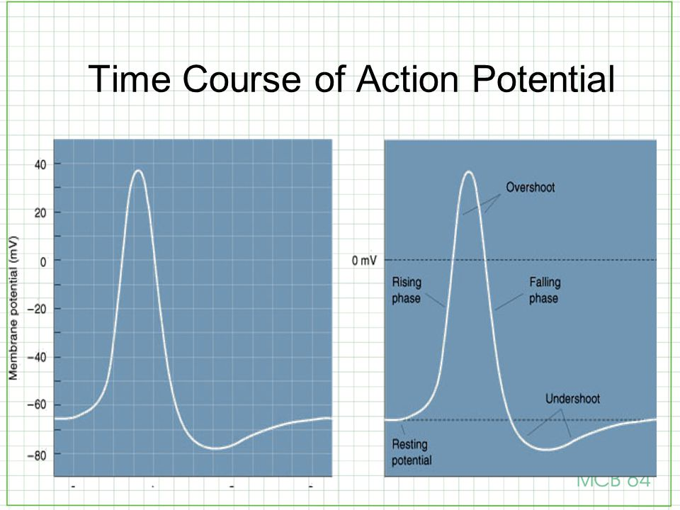 Time Course of Action Potential