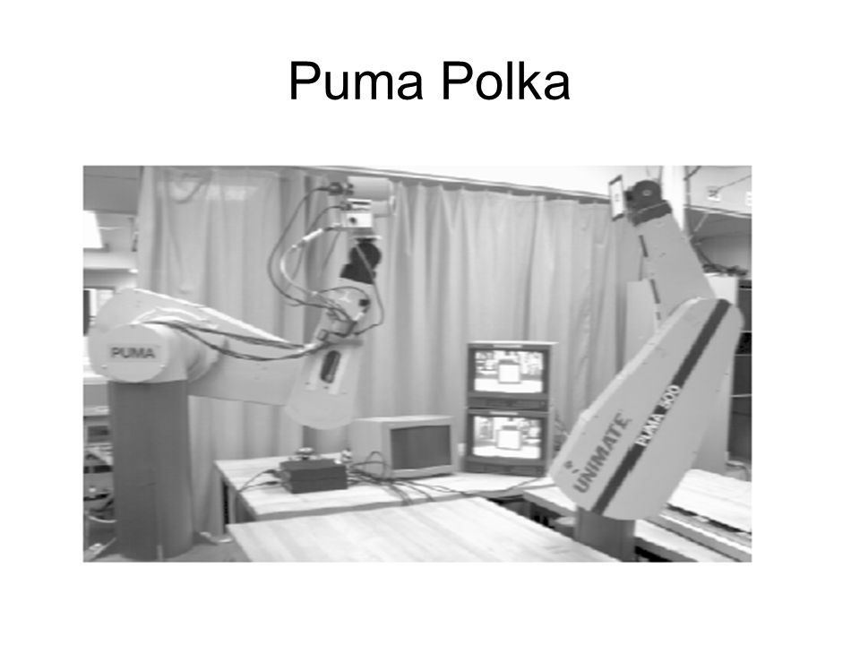 Puma Polka