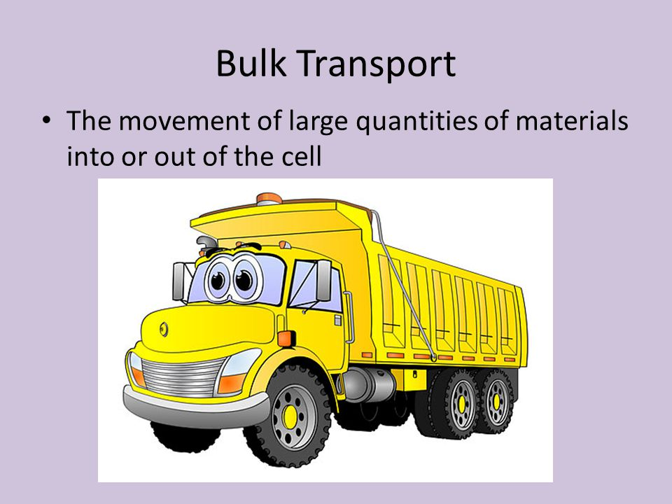 Bulk Transport The movement of large quantities of materials into or out of the cell