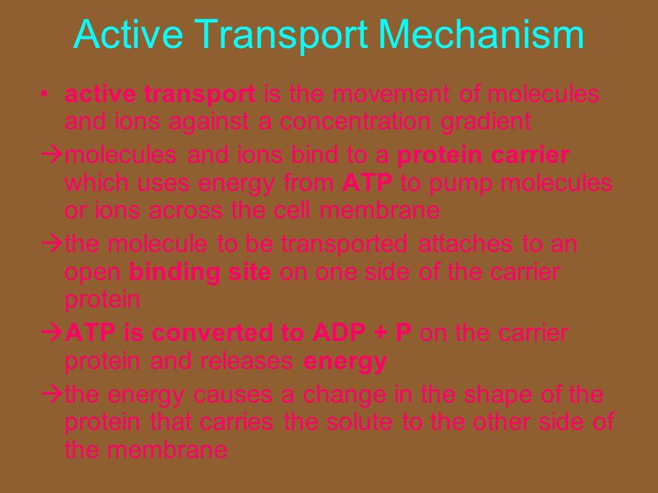 Active Transport Mechanism