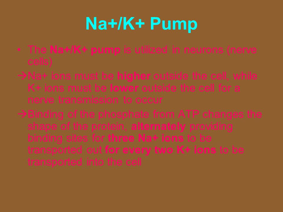Na+/K+ Pump The Na+/K+ pump is utilized in neurons (nerve cells)