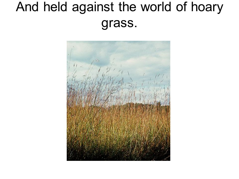 And held against the world of hoary grass.