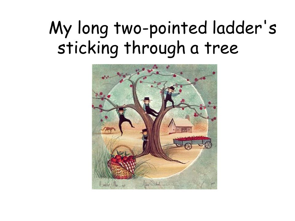My long two-pointed ladder s sticking through a tree