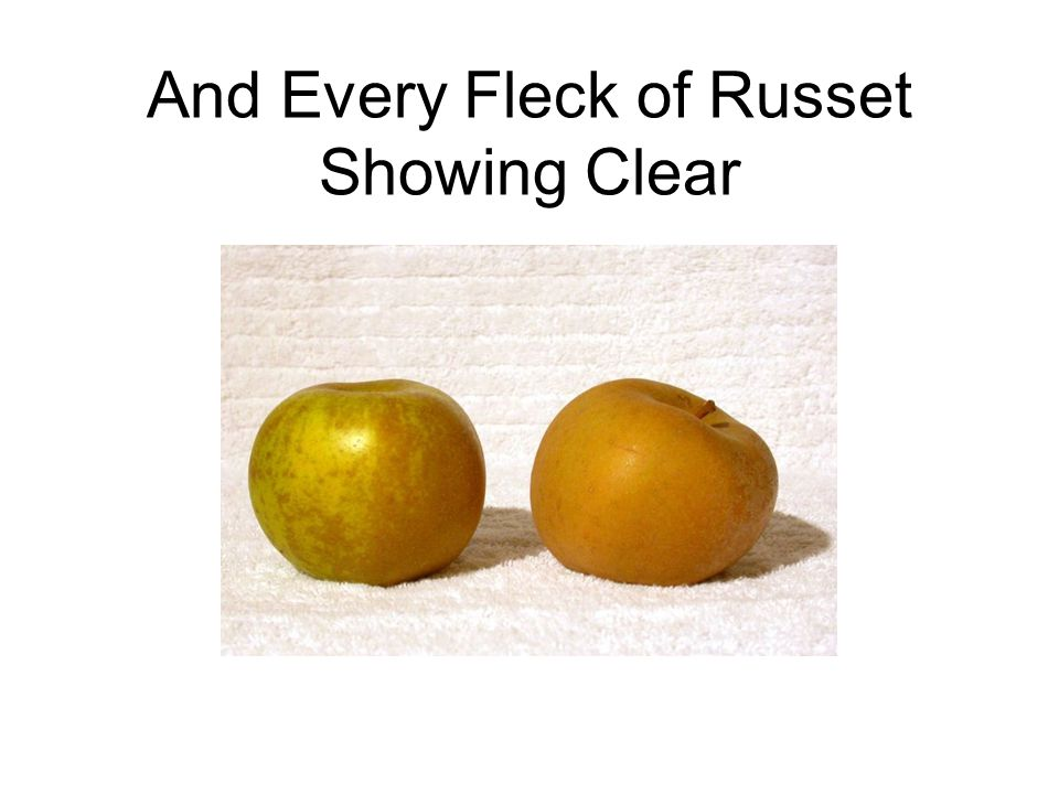 And Every Fleck of Russet Showing Clear