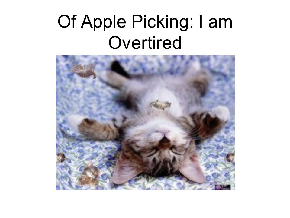 Of Apple Picking: I am Overtired