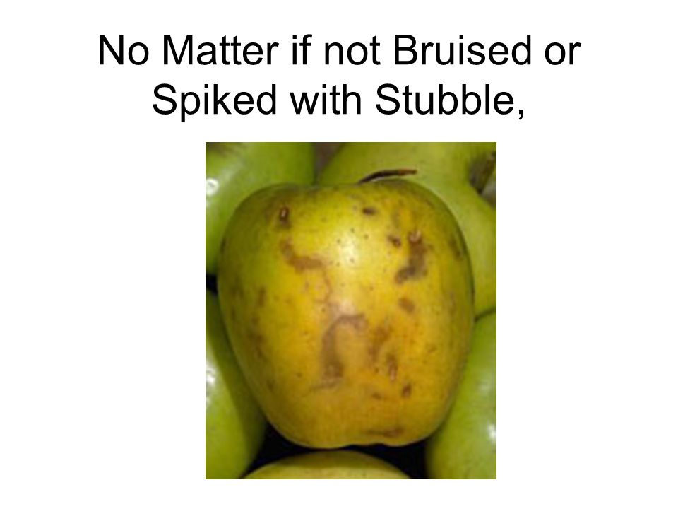 No Matter if not Bruised or Spiked with Stubble,