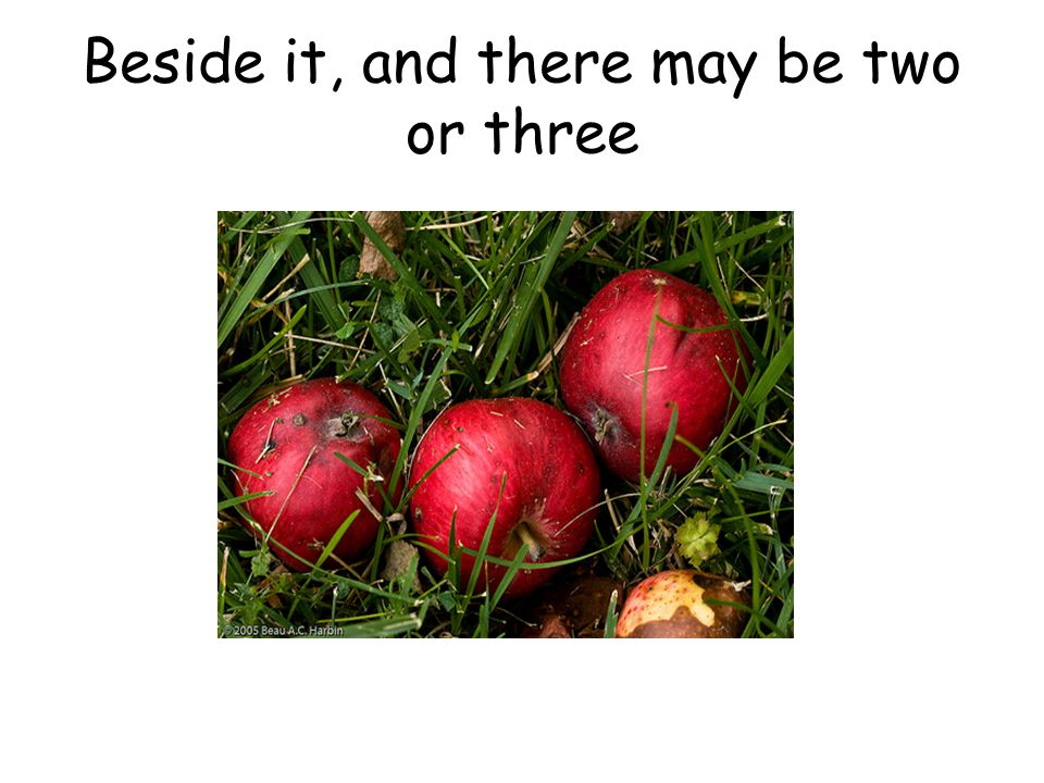 Beside it, and there may be two or three