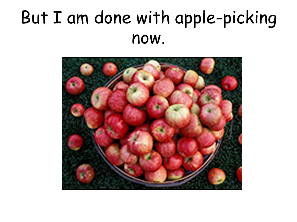 after apple picking by robert frost ppt video online  7 but i am done apple picking now