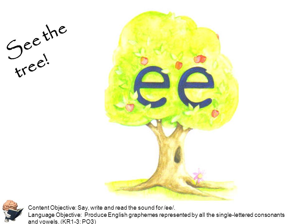 See the tree! Content Objective: Say, write and read the sound for /ee/.