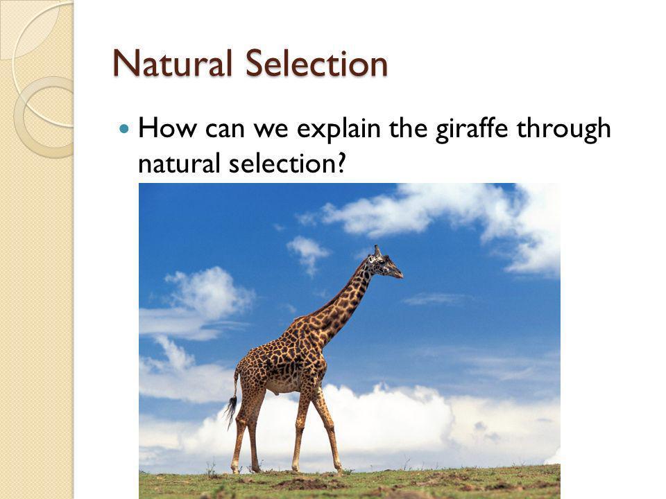 Natural Selection How can we explain the giraffe through natural selection