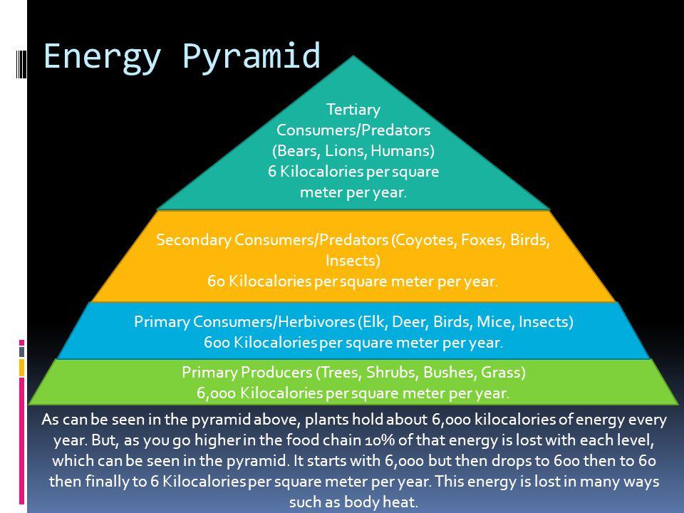 Energy Pyramid Tertiary Consumers/Predators (Bears, Lions, Humans)
