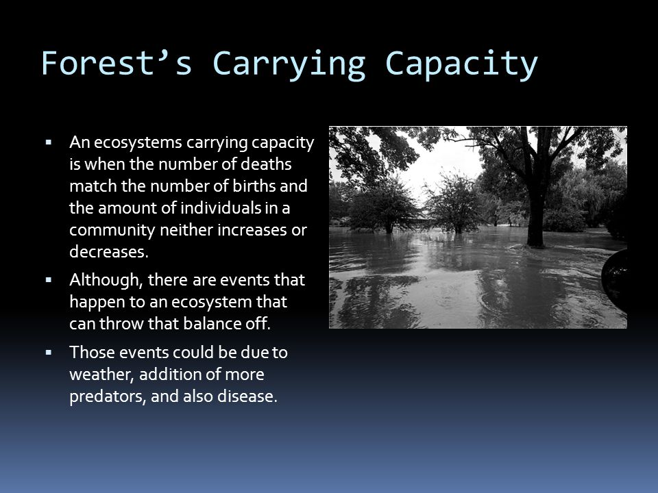 Forest's Carrying Capacity