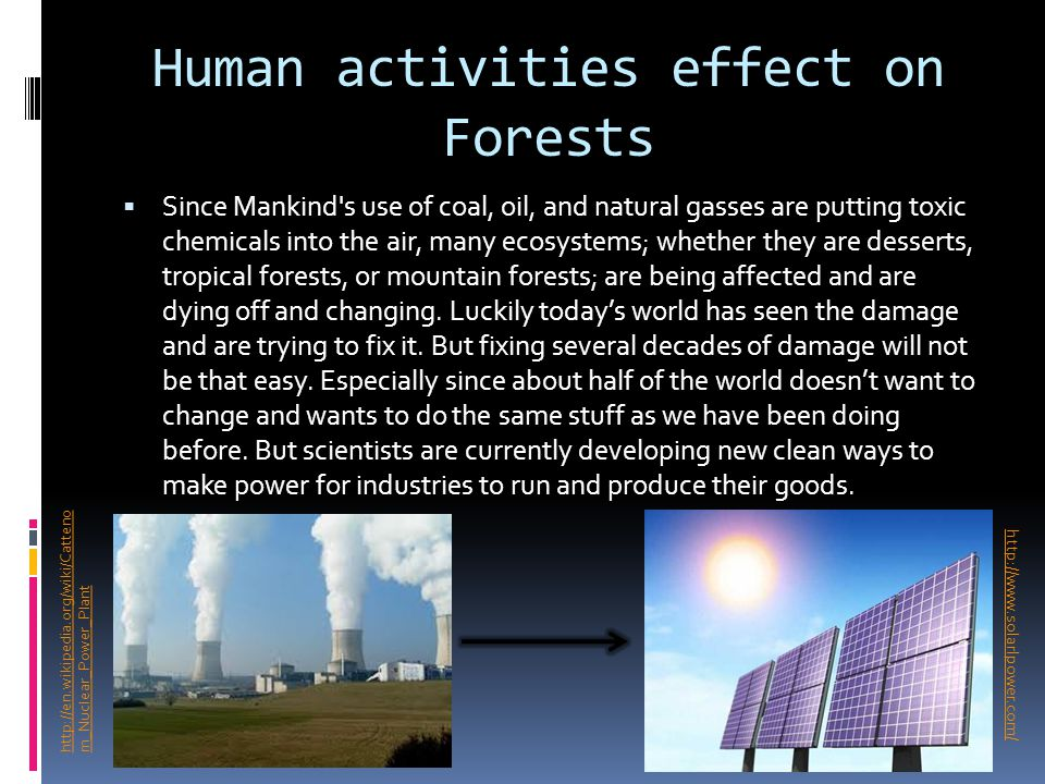 Human activities effect on Forests