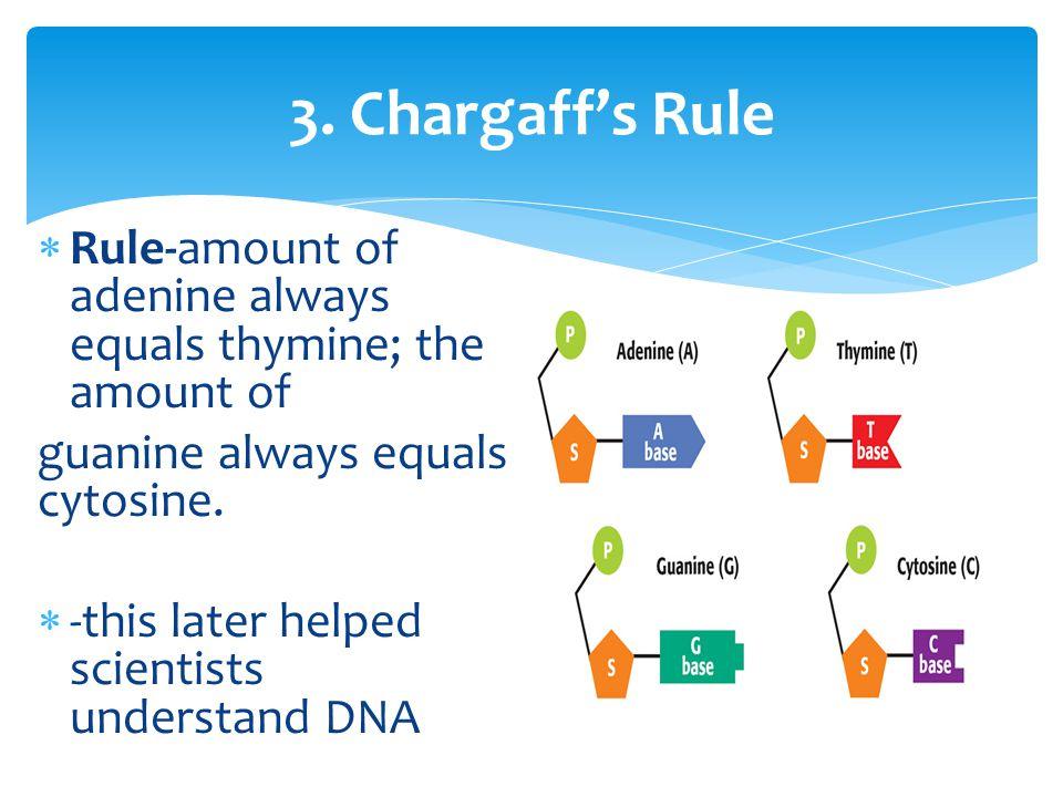 3. Chargaff's Rule Rule-amount of adenine always equals thymine; the amount of. guanine always equals cytosine.