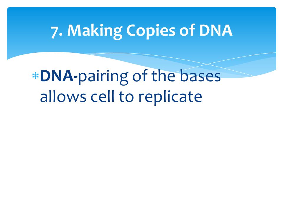 7. Making Copies of DNA DNA-pairing of the bases allows cell to replicate