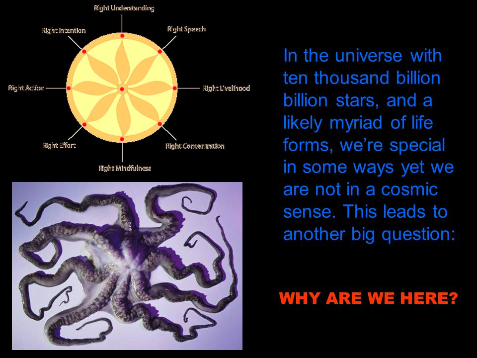 In the universe with ten thousand billion billion stars, and a likely myriad of life forms, we're special in some ways yet we are not in a cosmic sense. This leads to another big question: