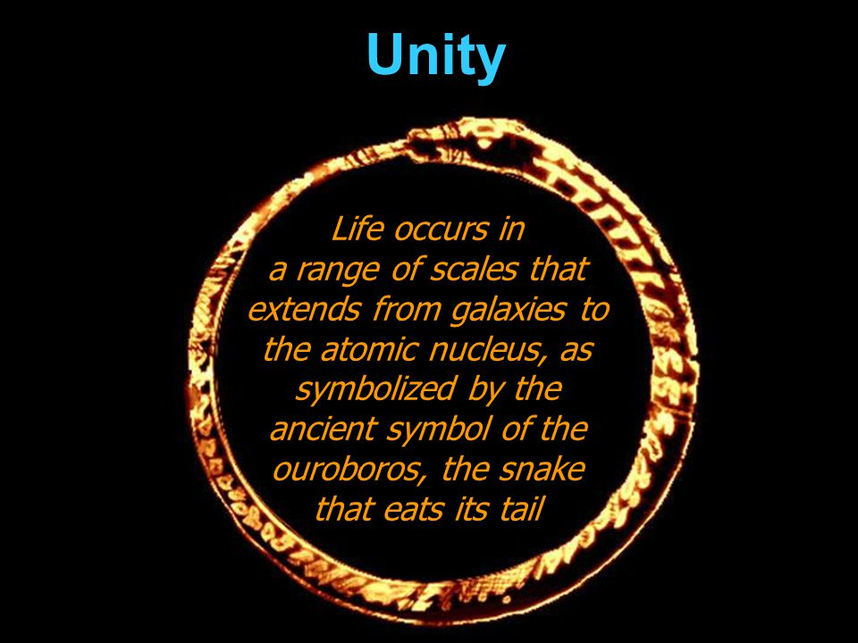 Unity Life occurs in.