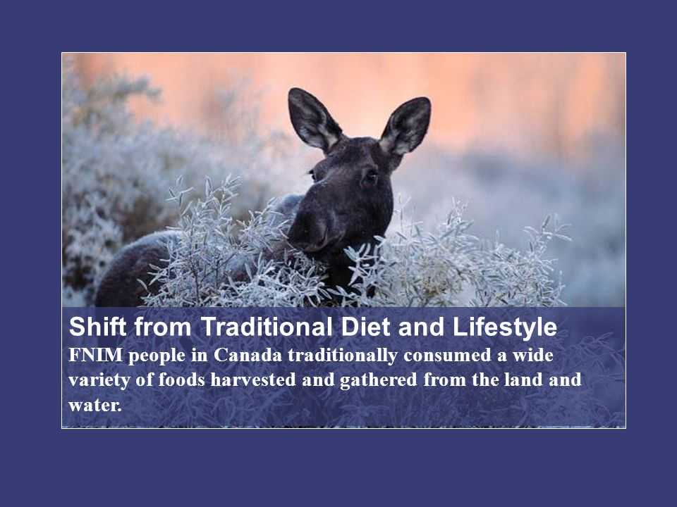 Shift from Traditional Diet and Lifestyle FNIM people in Canada traditionally consumed a wide variety of foods harvested and gathered from the land and water.