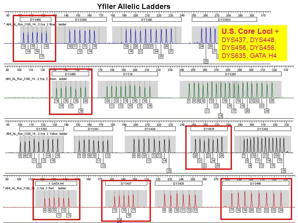 Yfiler Allelic Ladders