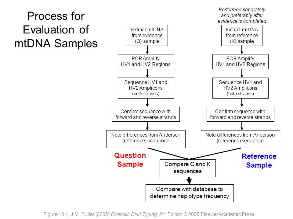 Process for Evaluation of mtDNA Samples