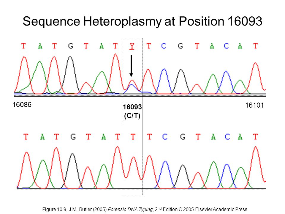 Sequence Heteroplasmy at Position 16093