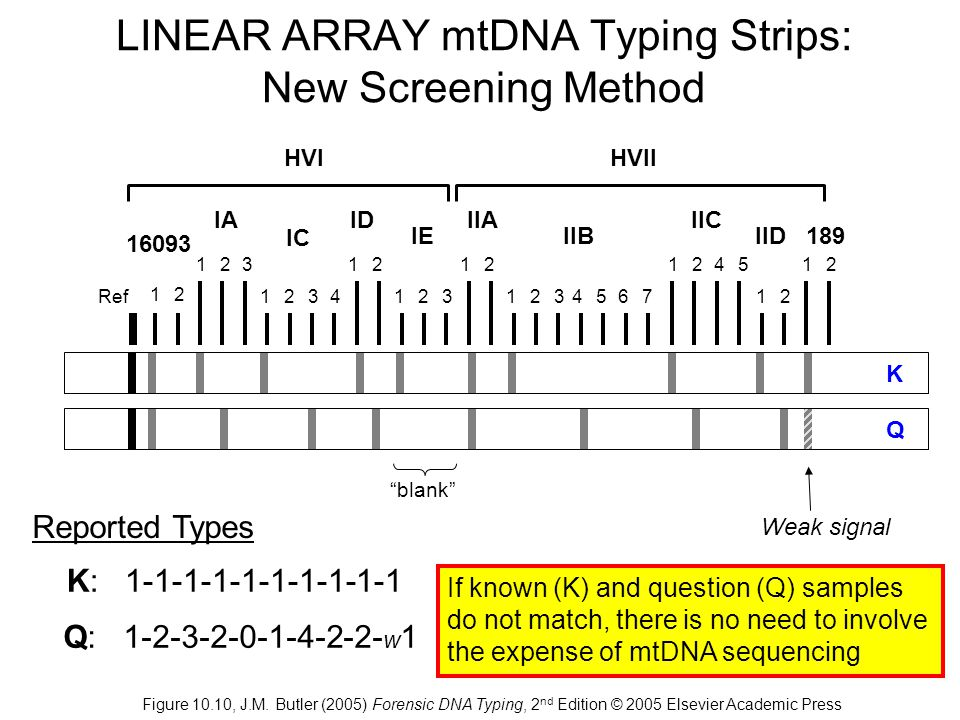LINEAR ARRAY mtDNA Typing Strips: New Screening Method