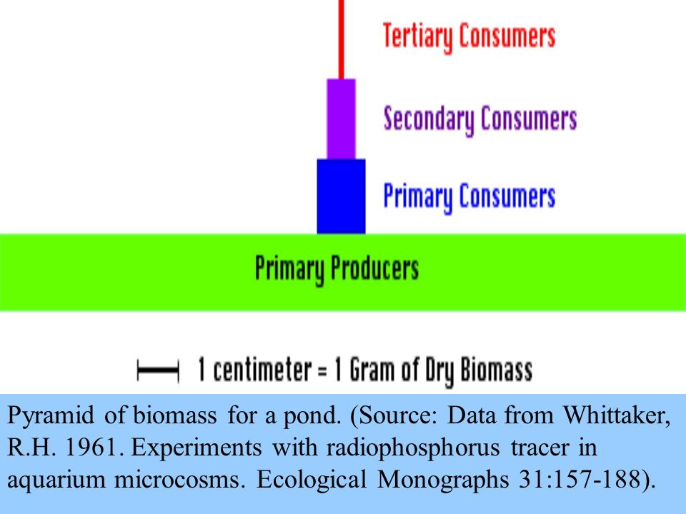 Pyramid of biomass for a pond. (Source: Data from Whittaker, R.H.