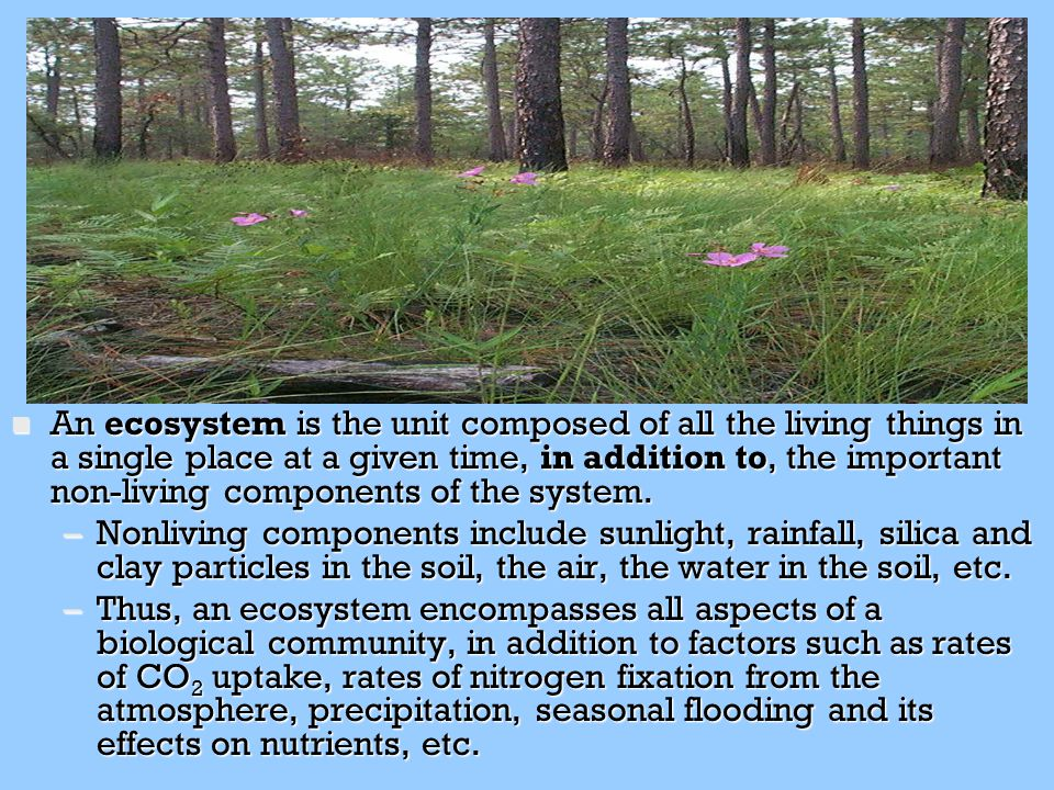 An ecosystem is the unit composed of all the living things in a single place at a given time, in addition to, the important non-living components of the system.